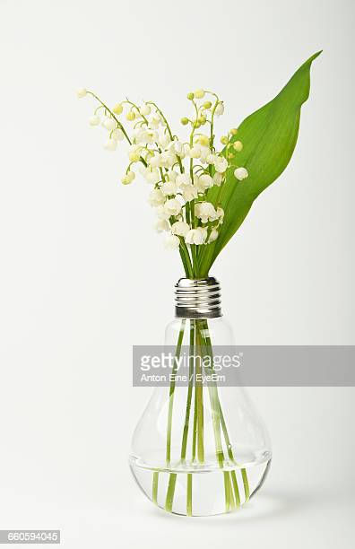 Close-Up Of Flowers In Light Bulb Against White Background