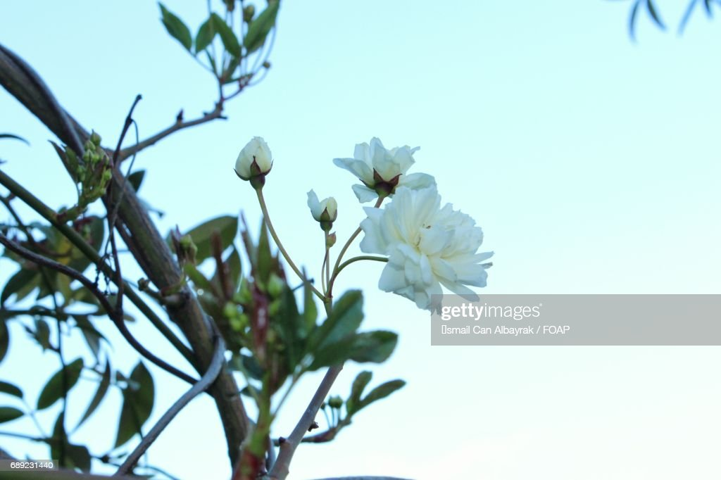Close-up of flowers in spring : Stock Photo