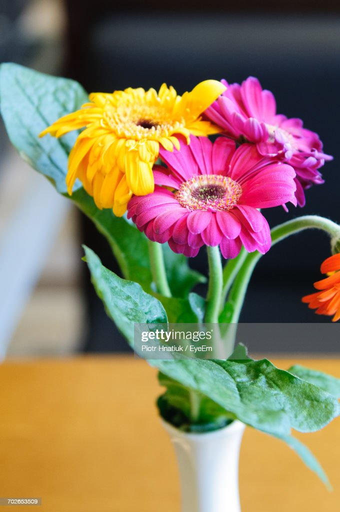 Close-Up Of Flowers In Vase : Stock Photo