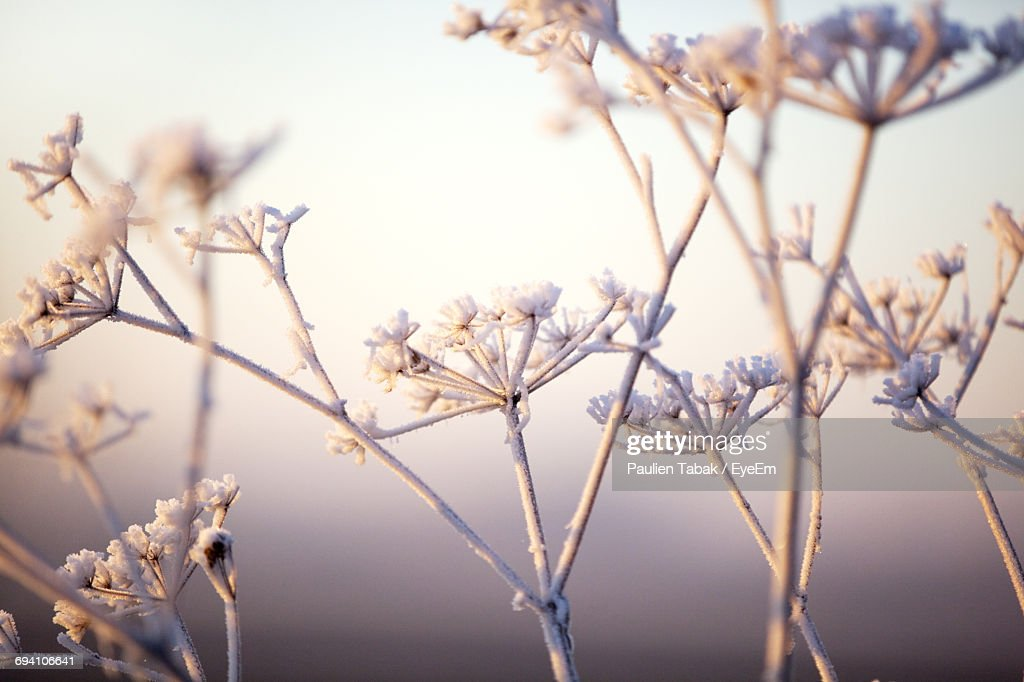 Close-Up Of Flowers On Branch : Stockfoto