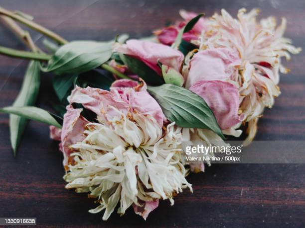 close-up of flowers on table,russia - nikitina stock pictures, royalty-free photos & images