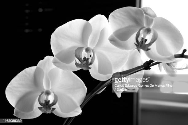 close-up of flowers - filho stock pictures, royalty-free photos & images