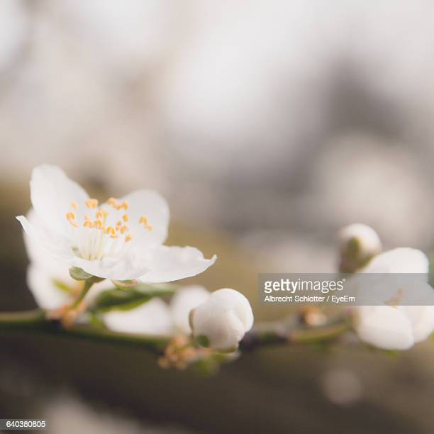 close-up of flowers - albrecht schlotter foto e immagini stock