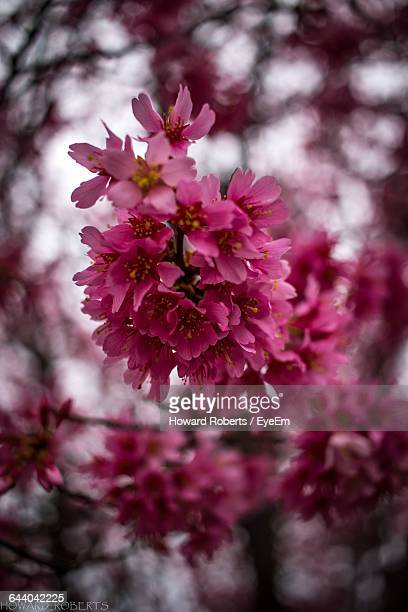close-up of flowers - howard,_wisconsin stock pictures, royalty-free photos & images