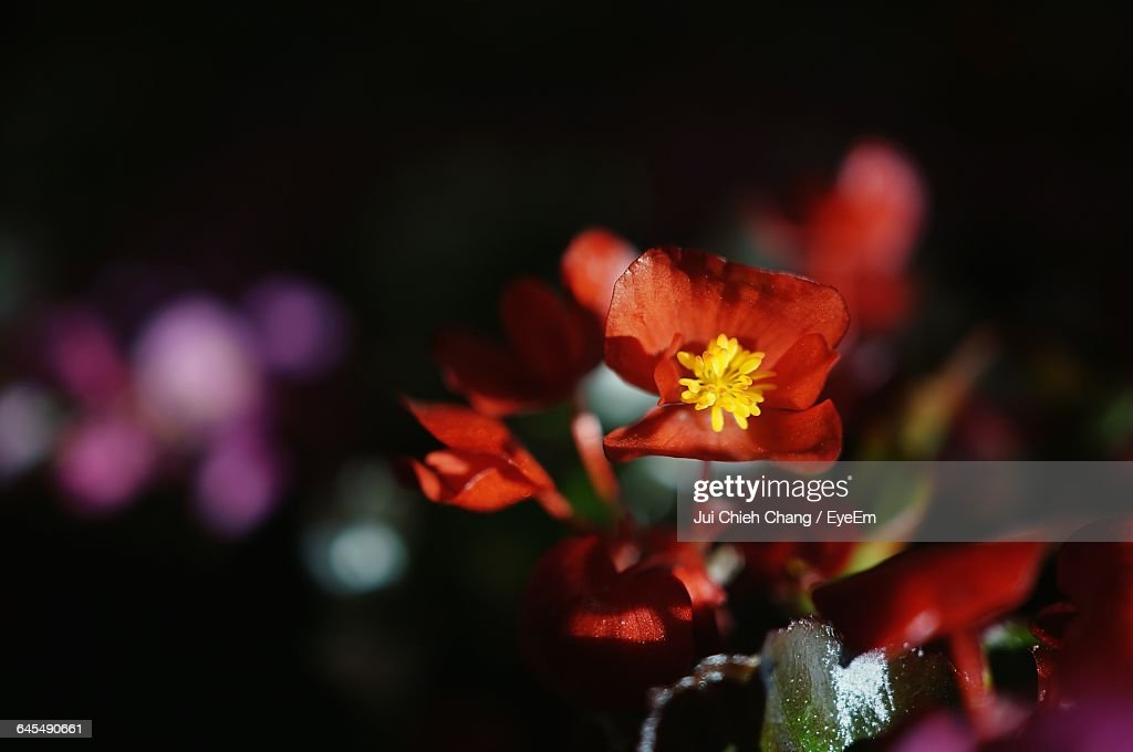 Close-Up Of Flowers : Stock Photo