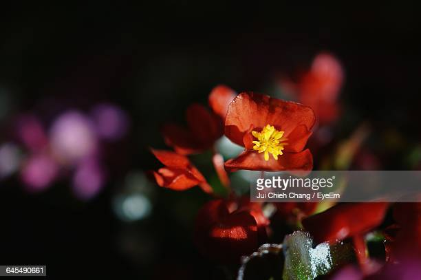 close-up of flowers - chang jui chieh stock photos and pictures