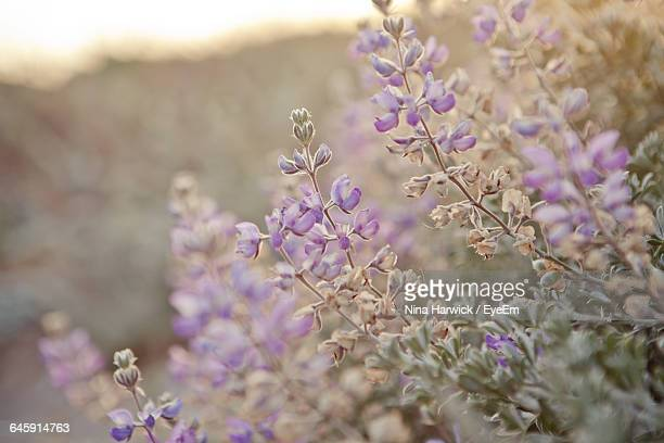 close-up of flowers - ca nina stock pictures, royalty-free photos & images