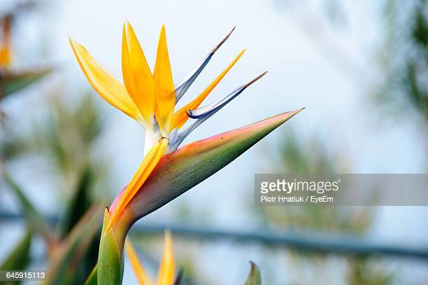 close-up of flowers - piotr hnatiuk stock pictures, royalty-free photos & images