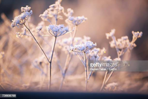 close-up of flowers - paulien tabak stock pictures, royalty-free photos & images