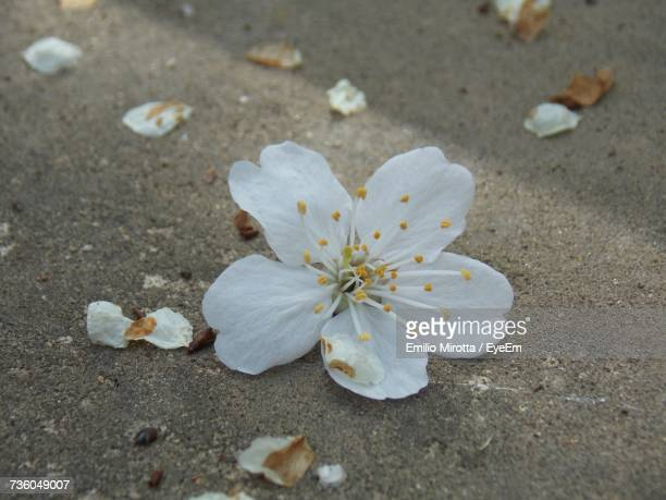 close-up of flowers - flower part stock pictures, royalty-free photos & images