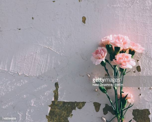 close-up of flowers - carnation flower stock pictures, royalty-free photos & images