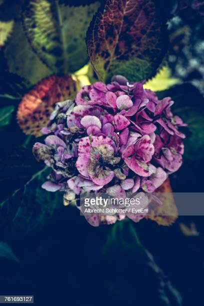 close-up of flowers - albrecht schlotter stock photos and pictures