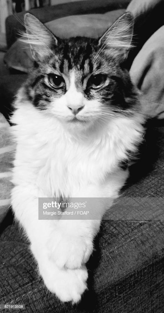 Close-up of fluffy kitten : Stock Photo