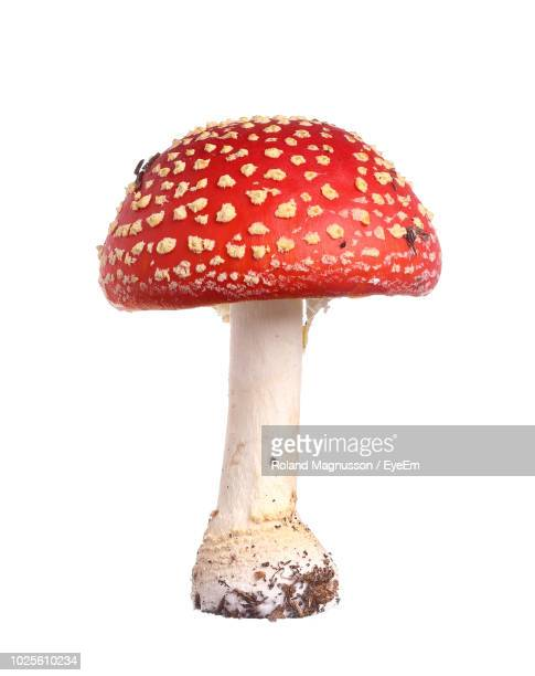 Close-Up Of Fly Agaric Mushroom Against White Background