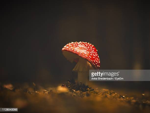 close-up of fly agaric mushroom on field - magic mushroom stock pictures, royalty-free photos & images