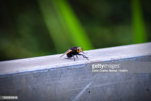 close-up of fly on wall - flying stock pictures, royalty-free photos & images