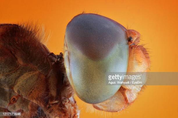 close-up of fly - central kalimantan stock pictures, royalty-free photos & images