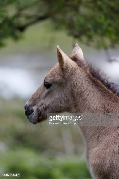Close-Up Of Foal