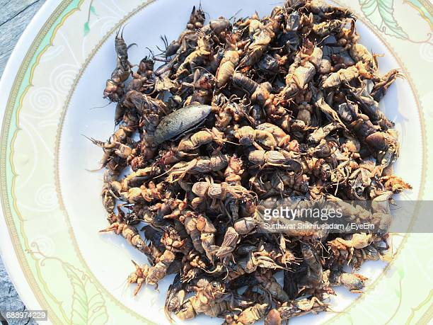 close-up of food - mole cricket stock pictures, royalty-free photos & images