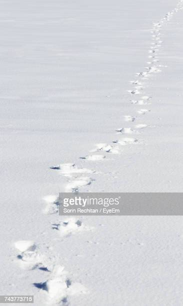 Close-Up Of Footprints On Frozen Water