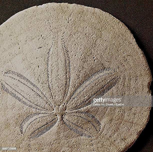 Close-Up Of Fossil Flower