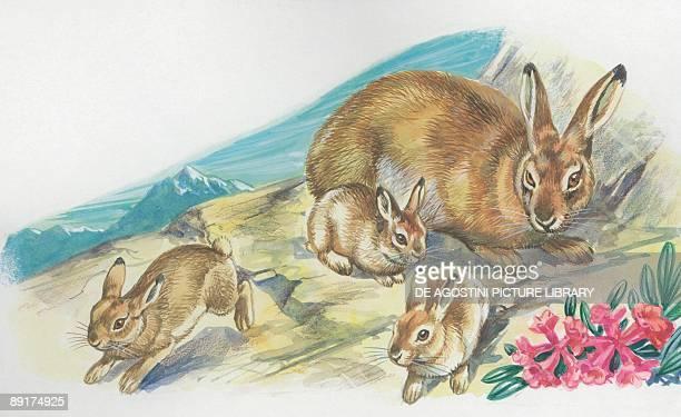 Closeup of four hares