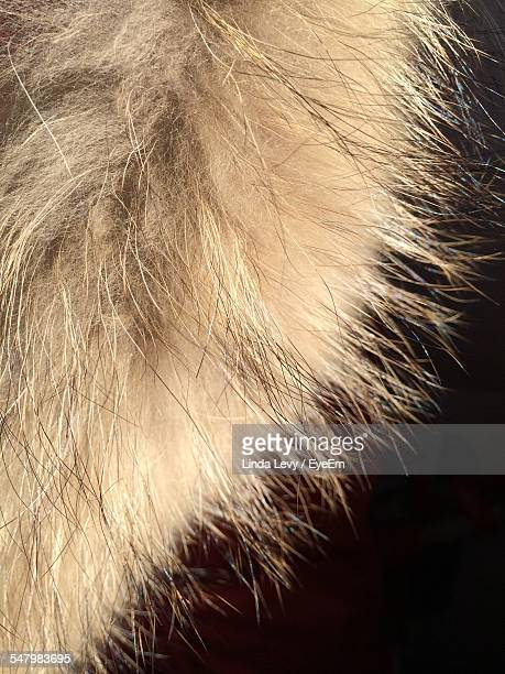 Close-Up Of Fox Fur