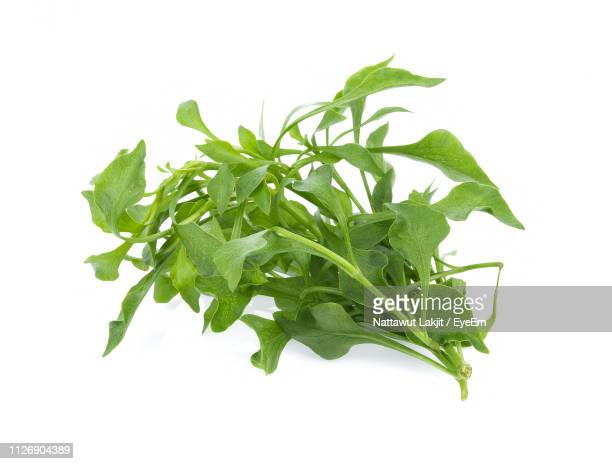 close-up of fresh arugula leaves against white background - arugula stock pictures, royalty-free photos & images