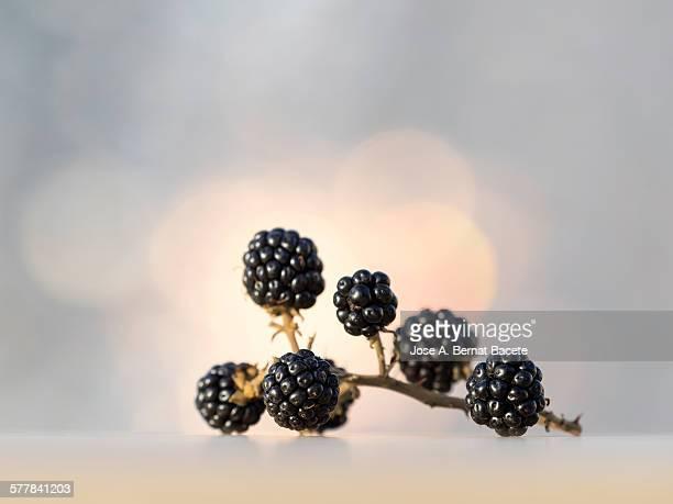 Close-up Of Fresh Blackberries