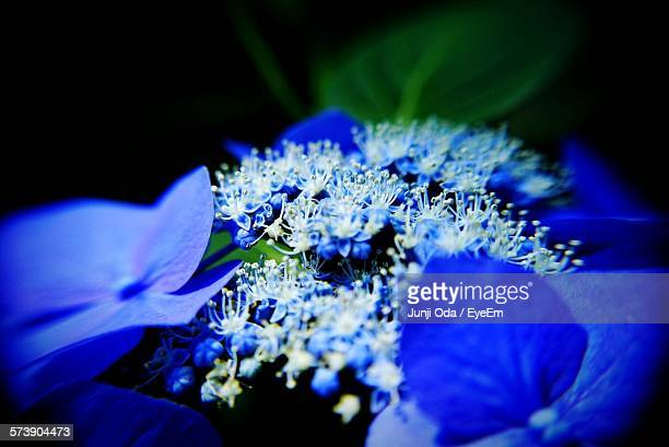 Close-Up Of Fresh Blue Flowers Blooming In Garden