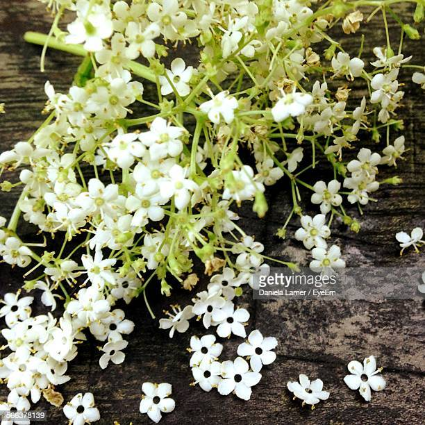 Close-Up Of Fresh Elderberry Flower Bunch On Wood