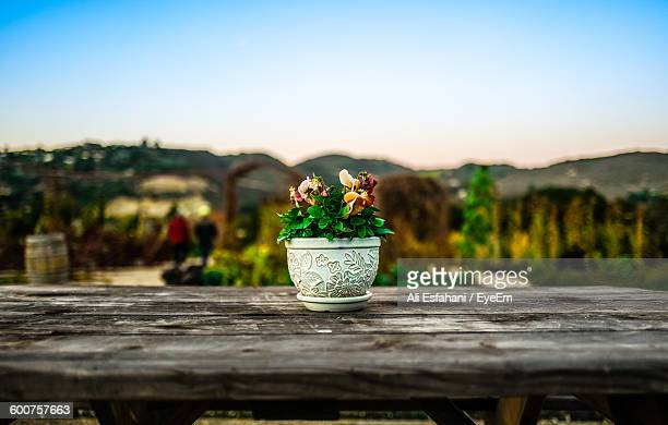 Close-Up Of Fresh Flower Pot On Table Against Clear Sky