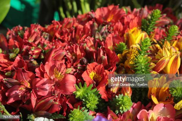Close-Up Of Fresh Flowers Blooming In Garden