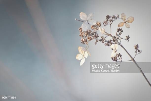 Close-Up Of Fresh Flowers Blooming On Tree Against Sky