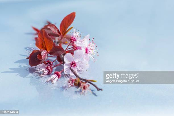 Close-Up Of Fresh Flowers In Water
