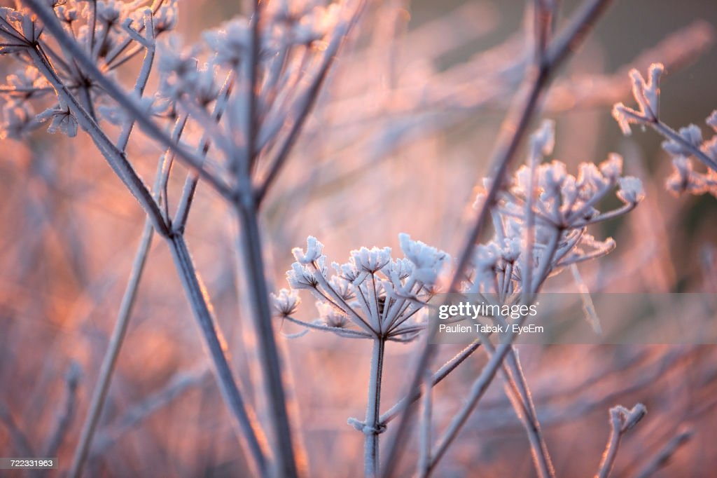 Close-Up Of Fresh Flowers On Branch : Stockfoto