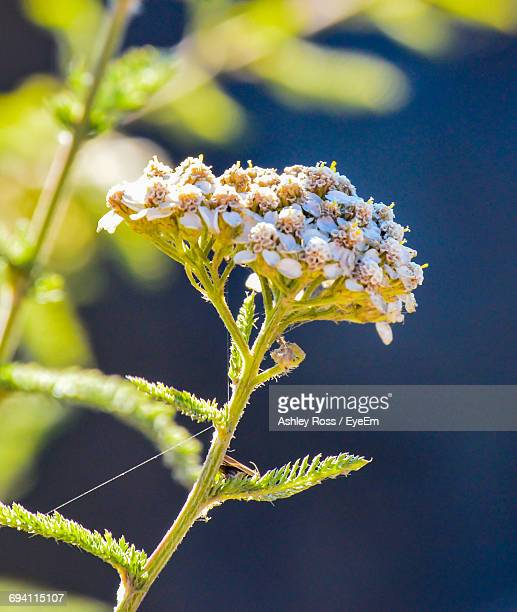 close-up of fresh flowers - ashley ross stock pictures, royalty-free photos & images
