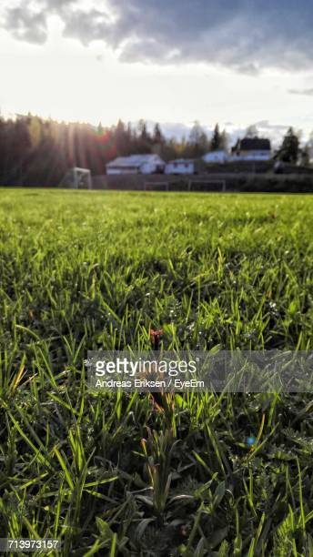 close-up of fresh green field against sky - eriksen foto e immagini stock
