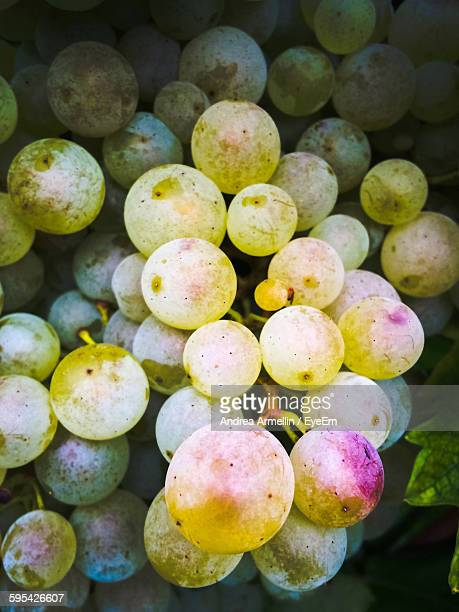 Close-Up Of Fresh Green Grapes Bunch