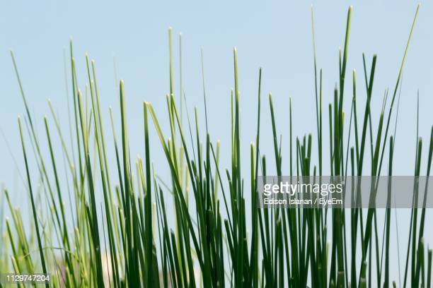 close-up of fresh green grass against sky - blade of grass stock pictures, royalty-free photos & images