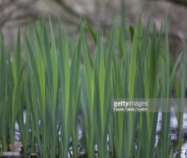 close-up of fresh green grass in field - paulien tabak stock pictures, royalty-free photos & images