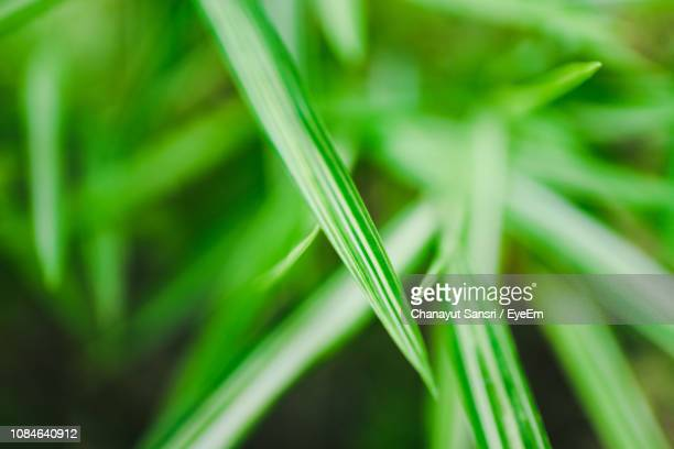 close-up of fresh green grass - chanayut stock photos and pictures