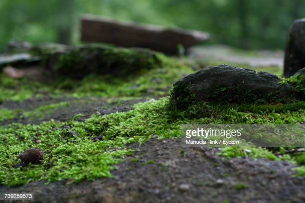 close-up of fresh green grass - moss stock pictures, royalty-free photos & images