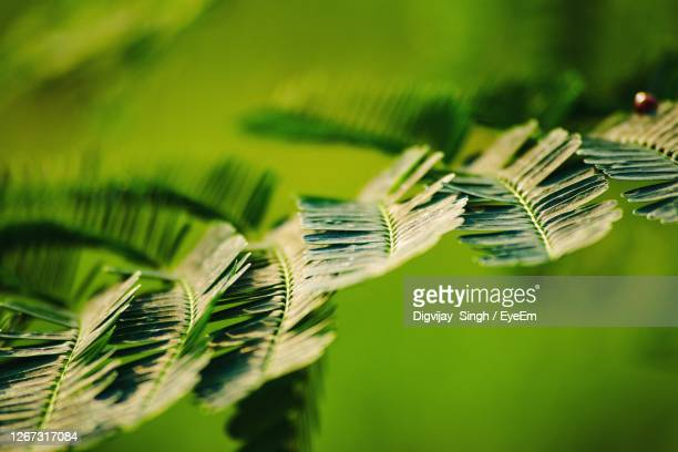 close-up of fresh green leaf with a ladybug - chandigarh stock pictures, royalty-free photos & images