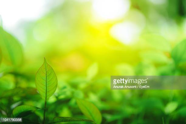 close-up of fresh green leaves - green background stock pictures, royalty-free photos & images