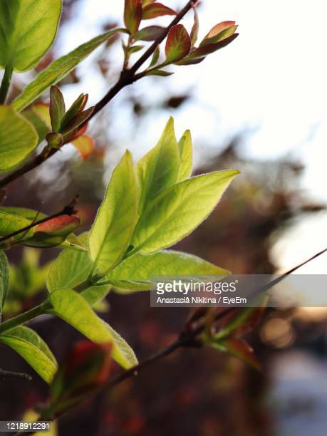 close-up of fresh green leaves - nikitina stock pictures, royalty-free photos & images