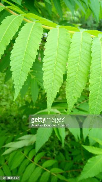 close-up of fresh green leaves - anastasi foto e immagini stock