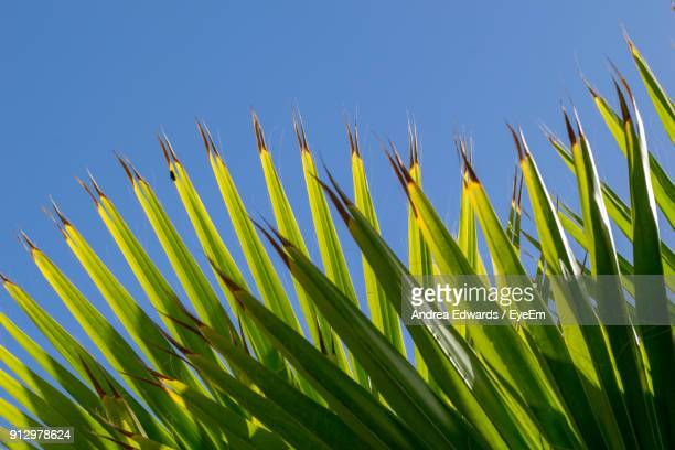 Close-Up Of Fresh Green Plant Against Clear Sky