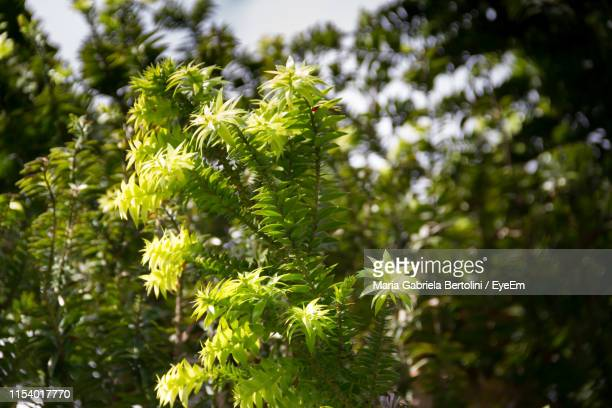 close-up of fresh green plant - gabriela stock pictures, royalty-free photos & images