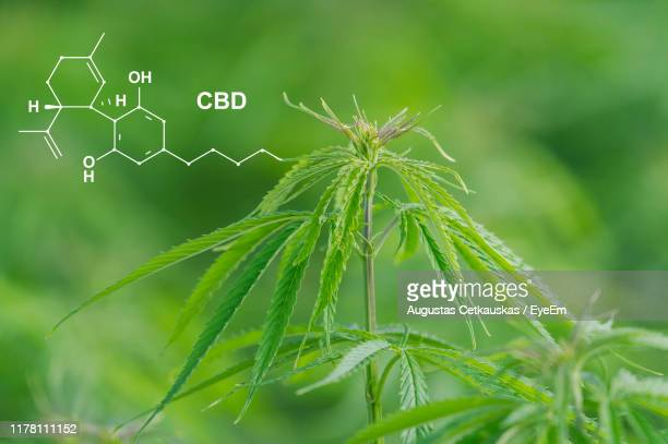 close-up of fresh green plant - chemical formula stock pictures, royalty-free photos & images